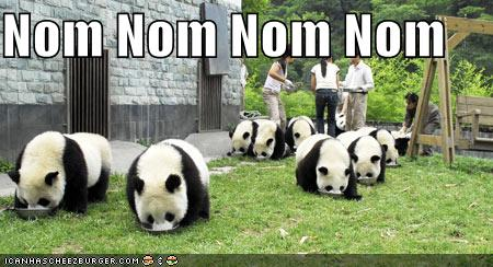funny-pictures-pandas-eating-noms